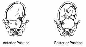anterior posterior